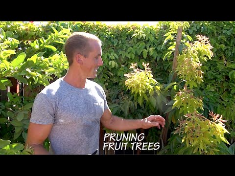 How to PRUNE Fruit Trees in your Garden