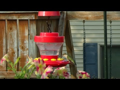 How to Make Homemade Sugar Water For Hummingbirds