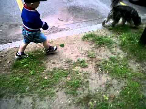 When Toddlers Walk Dogs