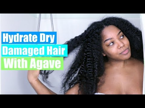 Hydrate Dry Damaged Hair | Agave Healing Oil Review | Natural Hair