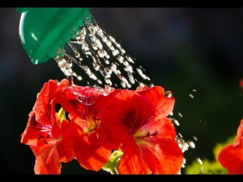 How to Make Liquid Fertilizer -  Liquid Fertilizer Tips