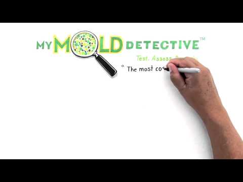 Do It Yourself Mold Testing Kit - How do you find out if you have mold