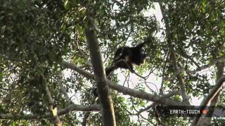Leopard snacks on baby impala & a rare Asian bearcat appears