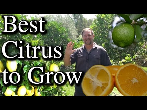 Top Five Citrus Fruit Trees To Grow in Your Backyard