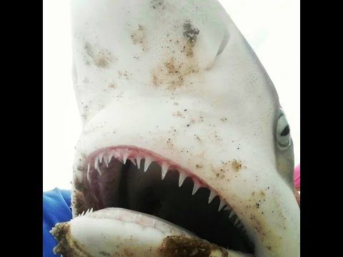 padre island national seashore shark fishing - Never Never Safari