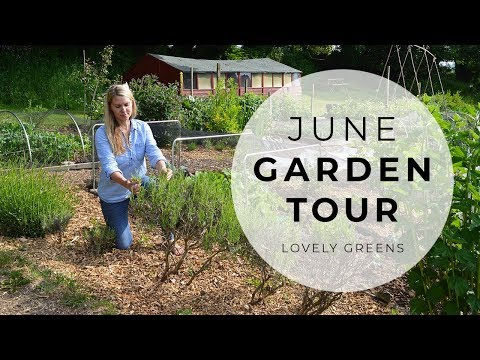 June Allotment Garden Tour