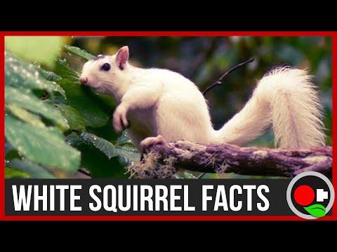 The White Squirrel Phenomenon