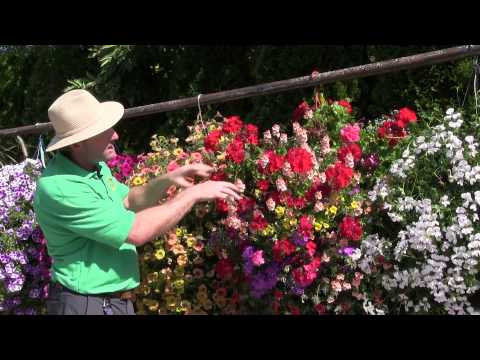 Standout Performers of 2014: Part 1 - Hanging Baskets