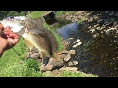 New Personal Best Bass! Catch And Cook Freshwater Drum