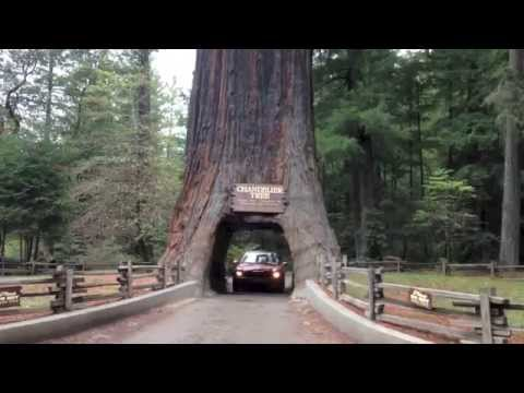 Driving Through 2 Huge Ancient Redwood Trees on the California Coast in a Mini Cooper Convertible