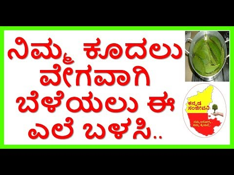 How to Control Hair Fall using Guava Leaves...Kannada Sanjeevani..