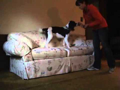 How to Train Your Dog to Get On and Off of Furniture - Clicker Training