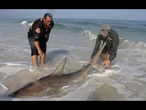 Fishing for MONSTER hammerheads, tiger sharks and dusky whalers! Pt.2