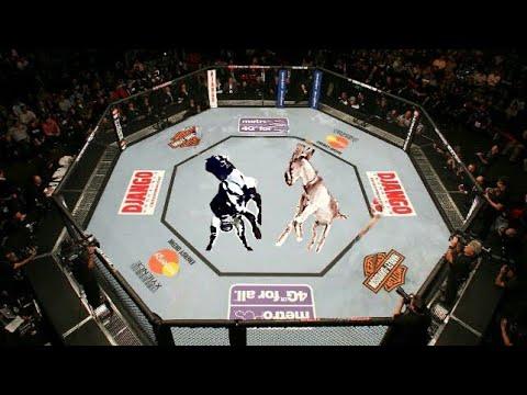 WWE Animals Big Fight