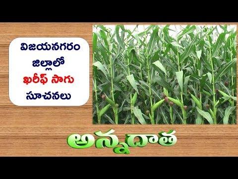 Kharif Crops for Vizianagaram || ETV Annadata