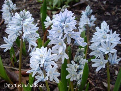 bulb flowers -  bulb flowers for sale