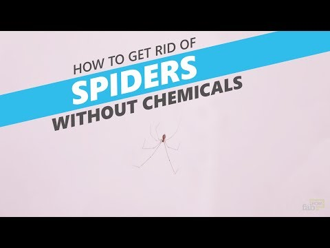 How to Get Rid of Spiders without Chemicals