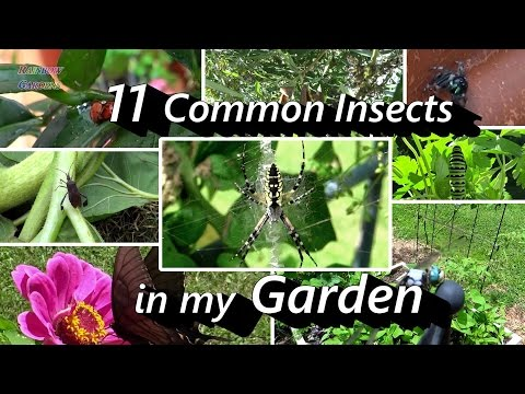2 Minute Insect ID -11 Common Insects in My Vegetable & Herb Garden