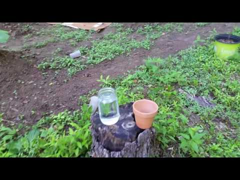 2 ways to increase soil acidity for blueberry bush