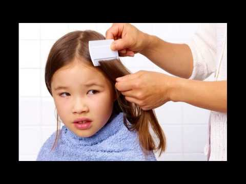 Keep Your Hair And Scalp Clean Of Lice To Prevent Itchy Scalp