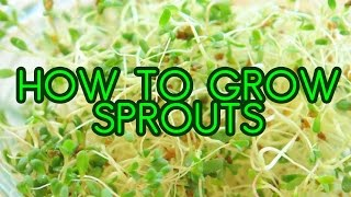 How To Grow Sprouts Alfalfa And Broccoli Sprouting In Mason Jars