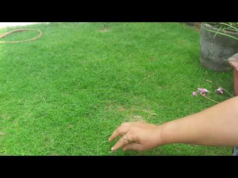How to grow Grass at home || 3 May, 2017