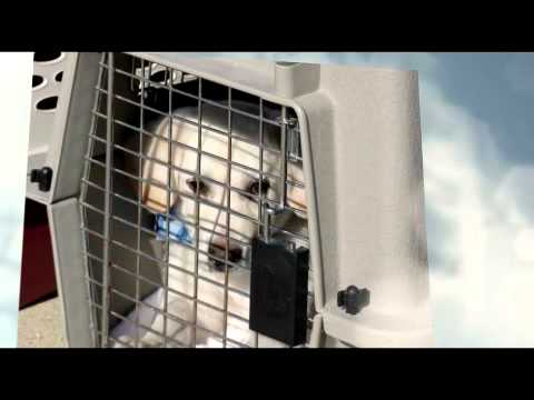 Airborne Rescue Society - The Amazing Flying Puppies