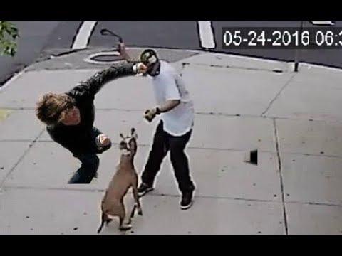 Dog lover knocks out a dog abuser!!!