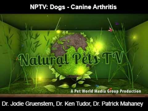 Natural Pets TV: Dog - Canine Arthiritis - What it is is, how to treat and what to know...