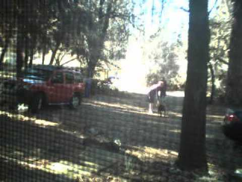 December 21, 2016 Paradise, CA Neighbors aggressive pitbulls in my front yard