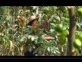 Programa Vida no Campo 24/03/19 - Especial mês da mulher: Produtora de figo