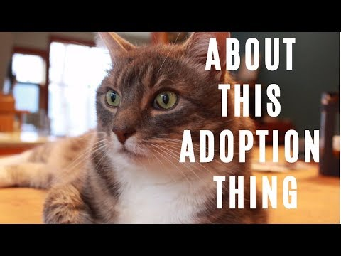 About this Cat Adoption...