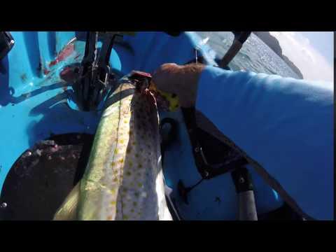 Spyderco Assist Salt gill cutting mackerel