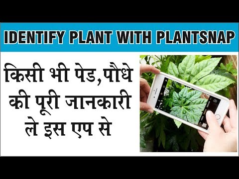 किसी भी पौधो की जानकारी ले इस एप से फोटो लेकर । Identify Plants with Plantsnap