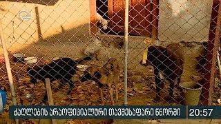 ძაღლების არაოფიციალური თავშესაფარი წნორში
