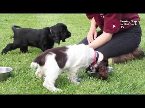 Hearing Dogs TV Episode 5: Welcome to our Puppy Block