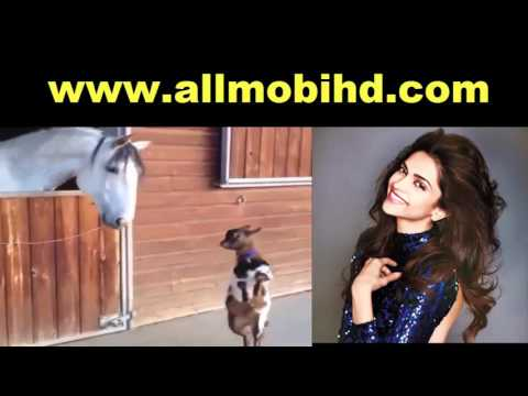 Goat and Hourse Romantic Video