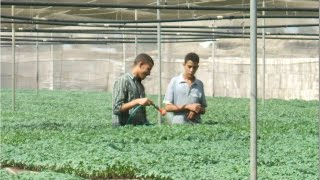 #x202b;(23) إنتاج شتلات الخضر فى الصوانى (طماطم - فلفل -باذنجان)| د.أشرف شوقى#x202c;lrm;