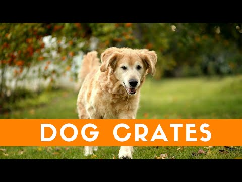 Should You Use A Crate For Your Dog?