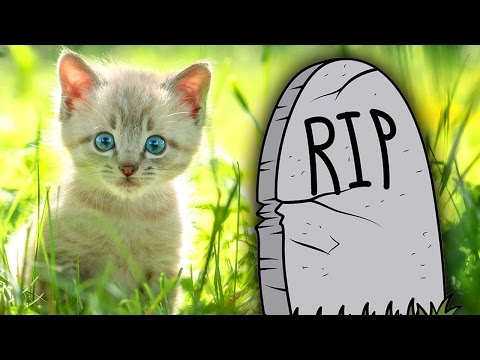 Where Pets Go When They Die
