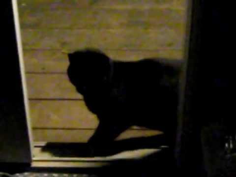 Black Kitty 3 when he came inside!.avi
