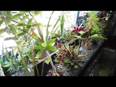 aquaponice interior window garden for home & apartment