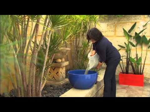 The Garden Gurus - Creating Water Bowl Features at Home