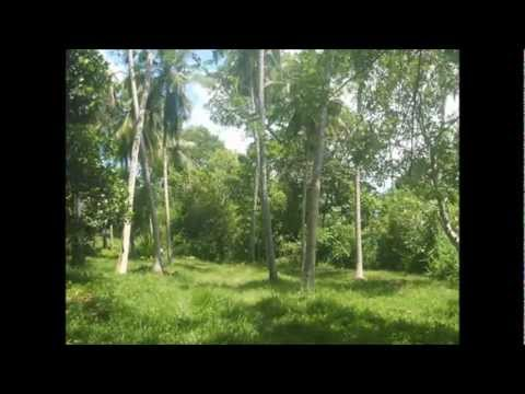 Land for sale in sri lanka - Tangalle - Southern - 'peacock isle'