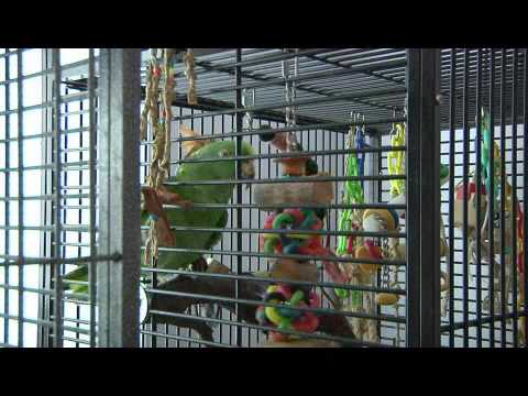 How to Build a Bird Habitat