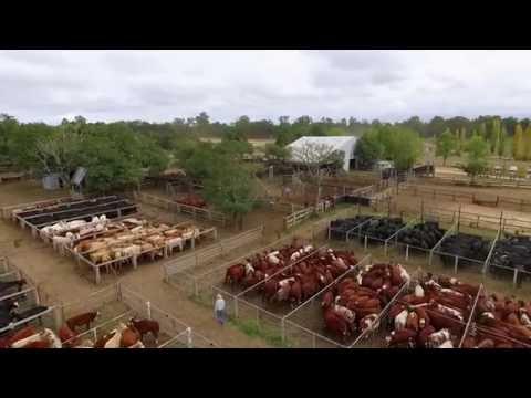 AuctionsPlus - Australia's Online Saleyard