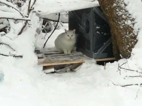 Winter Cat Shelters for feral cats - please help keep feral cats warm this winter.
