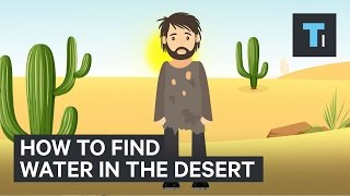 hereshowtofindwaterifyoureeverstuckinthedesert