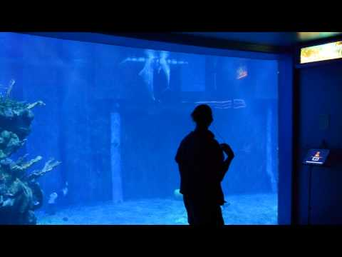 Dolphin Research at Epcot Living Seas