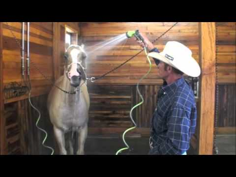 Teaching a Horse to Tolerate It's Head Being Washed